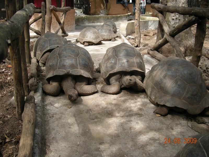 Afrique Août 2009 - photos de Louise 530