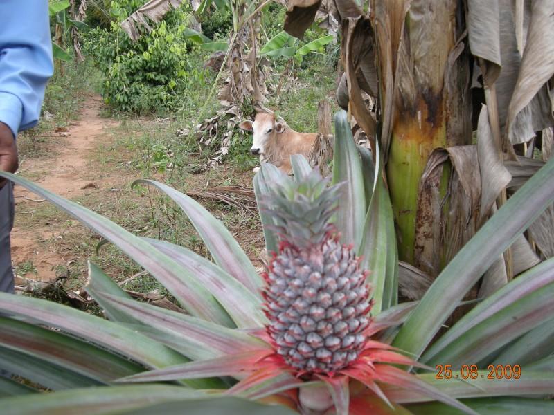 Afrique Août 2009 - photos de Louise 604