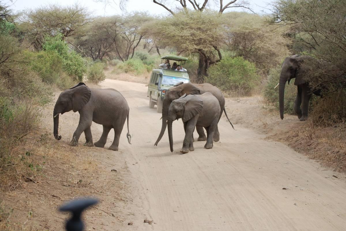 Afrique Août 2009 - photos de René 091