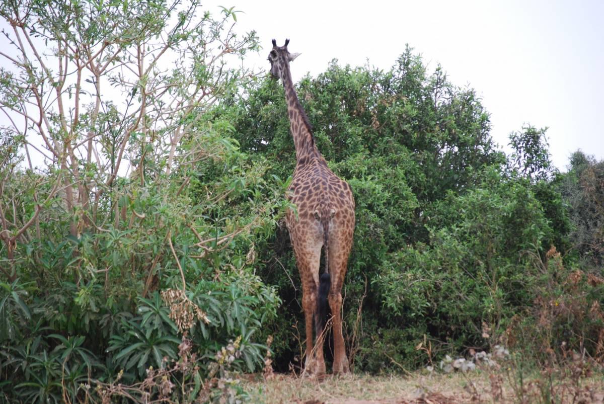 Afrique Août 2009 - photos de René 123