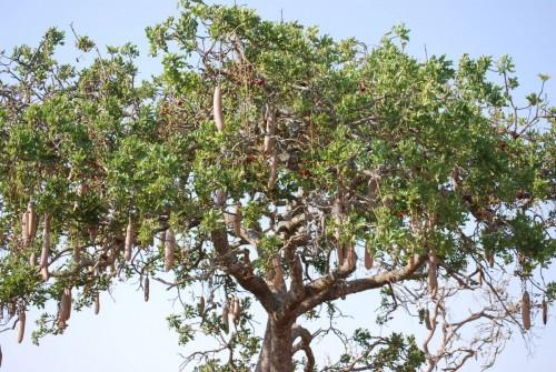 Afrique Août 2009 - photos de René 232