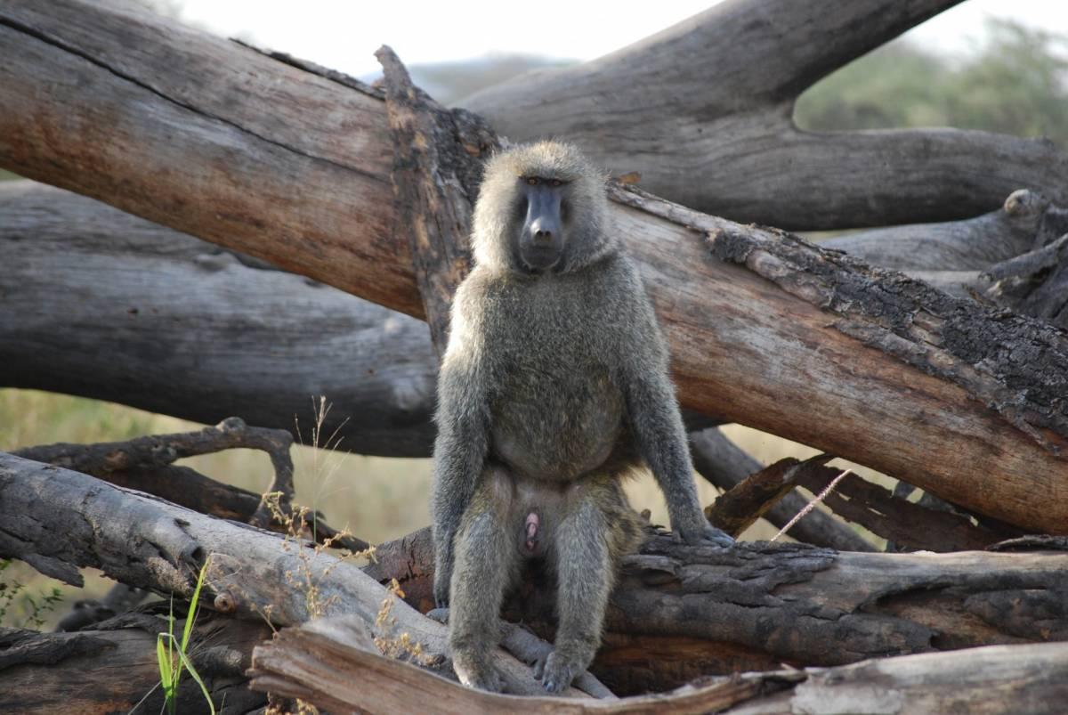 Afrique Août 2009 - photos de René 302