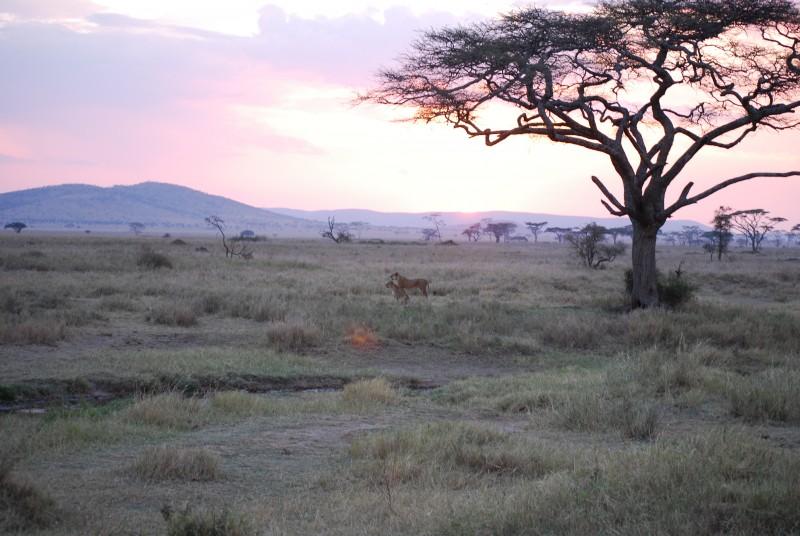 Afrique Août 2009 - photos de René 328