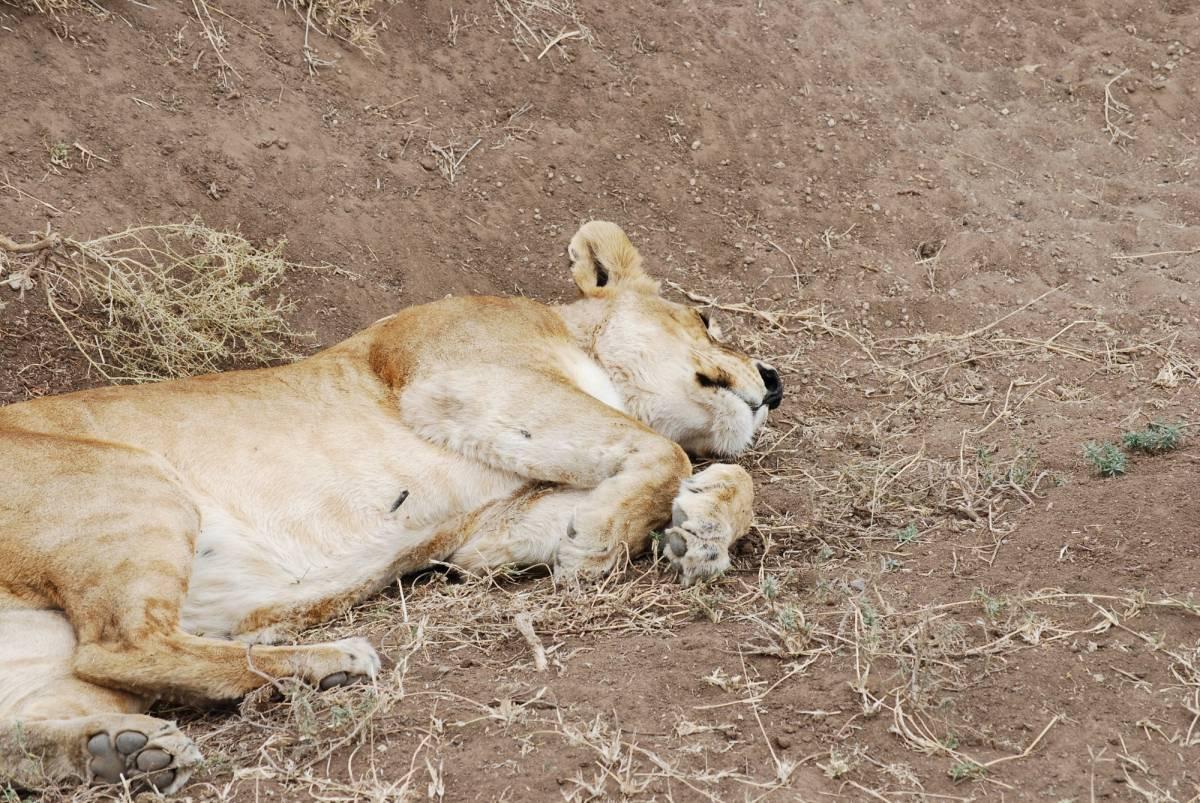Afrique Août 2009 - photos de René 360