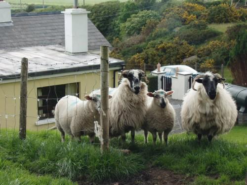 Irlande 2007 - Louise disque 1 038