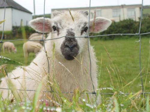 Irlande 2007 - Louise disque 1 159