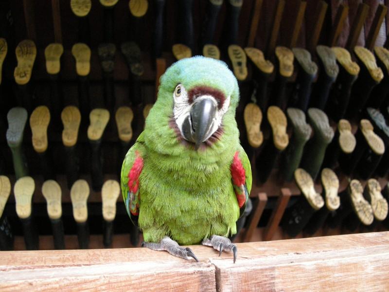 Pérou 2008 - photos de Louise 088