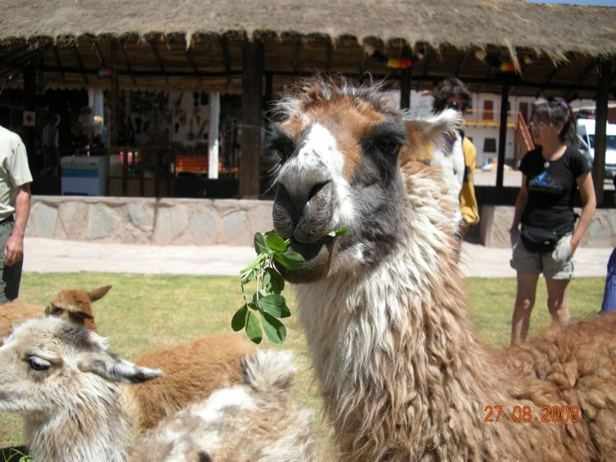 Pérou 2008 - photos de Louise 513